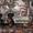 щенки цвергпинчера (мини доберман) #1591421