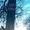 Дача в Новополоцке Шнитки Нефтяник-1 ул.6-я Линия-119 - Изображение #9, Объявление #1681386